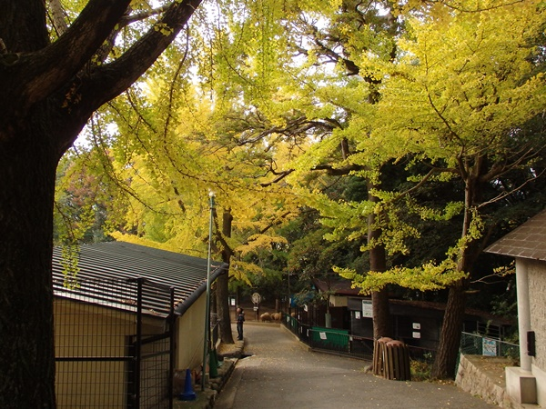 五月山動物園4