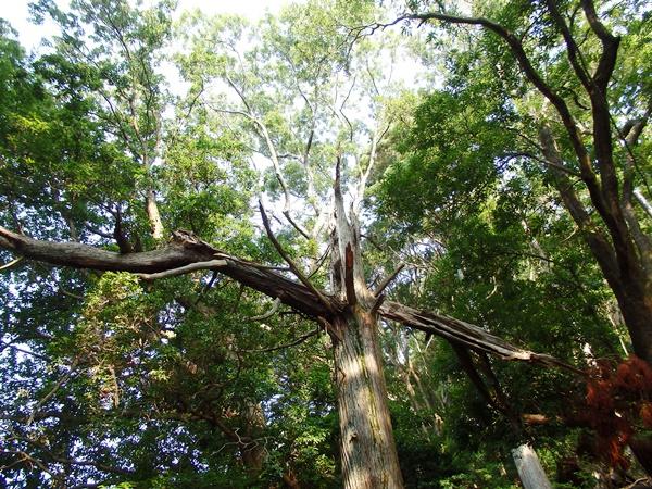 雷に打たれた木